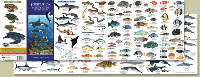 Costa Rica Marine Guide, click for more information